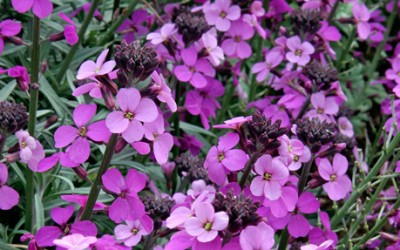Plant Of The Month – July