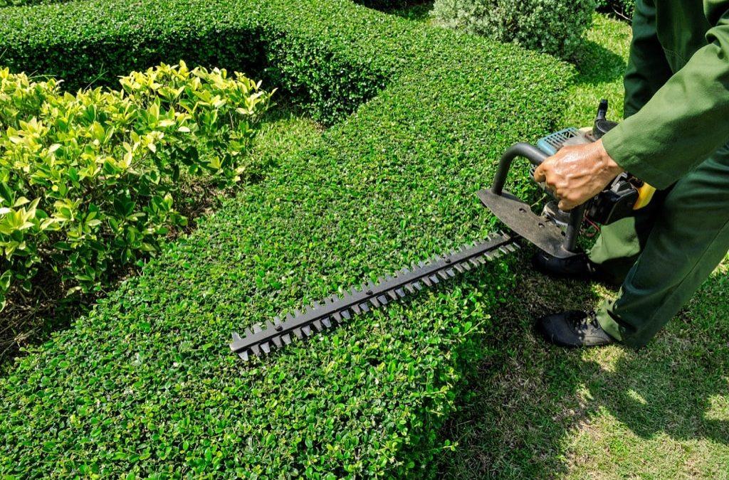 Jobs in the Garden for Summer